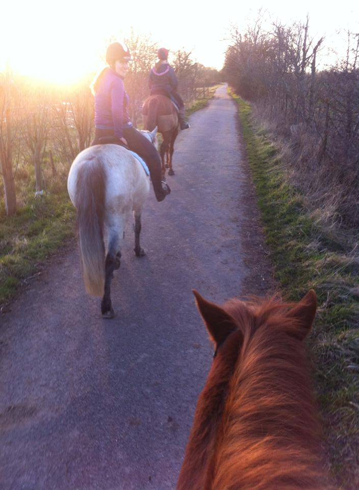 Saddle shot of horses out hacking