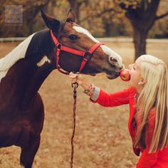 horse and girl sharing apple