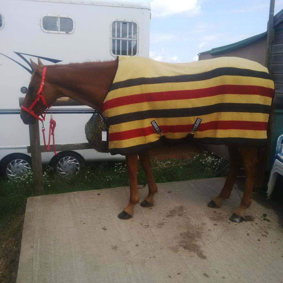 newmarket fleece rug
