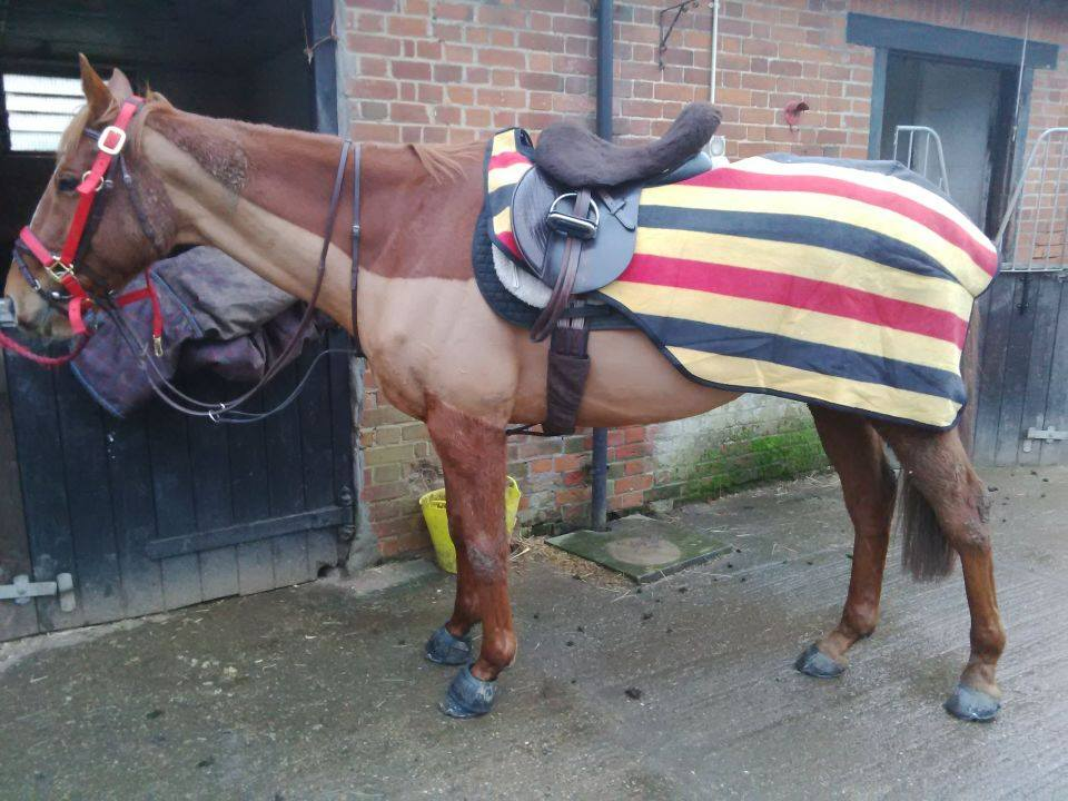 newmarket exercise rug