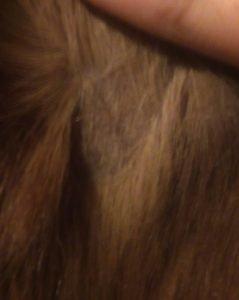 Own Photo, Scottie's Bald patch