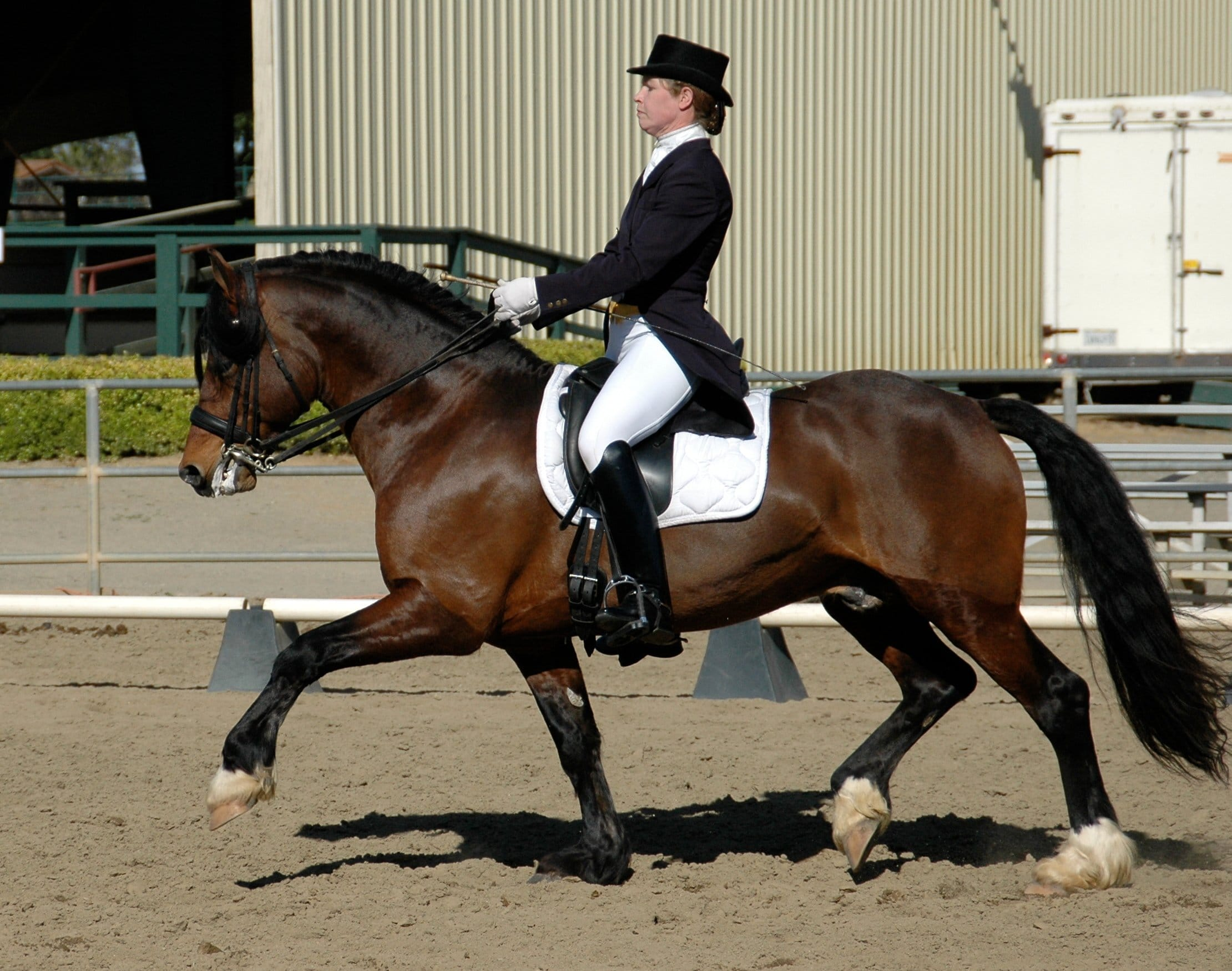 rider wearing top hat, barefoot vs shoeing