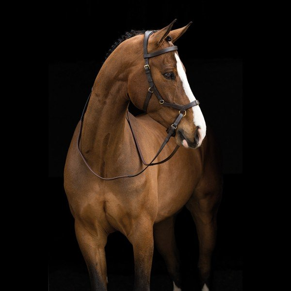 Credit Horsewear Ireland via https://www.horseware.com/product/5-stars-products/rambo-micklem-multi-bridle/