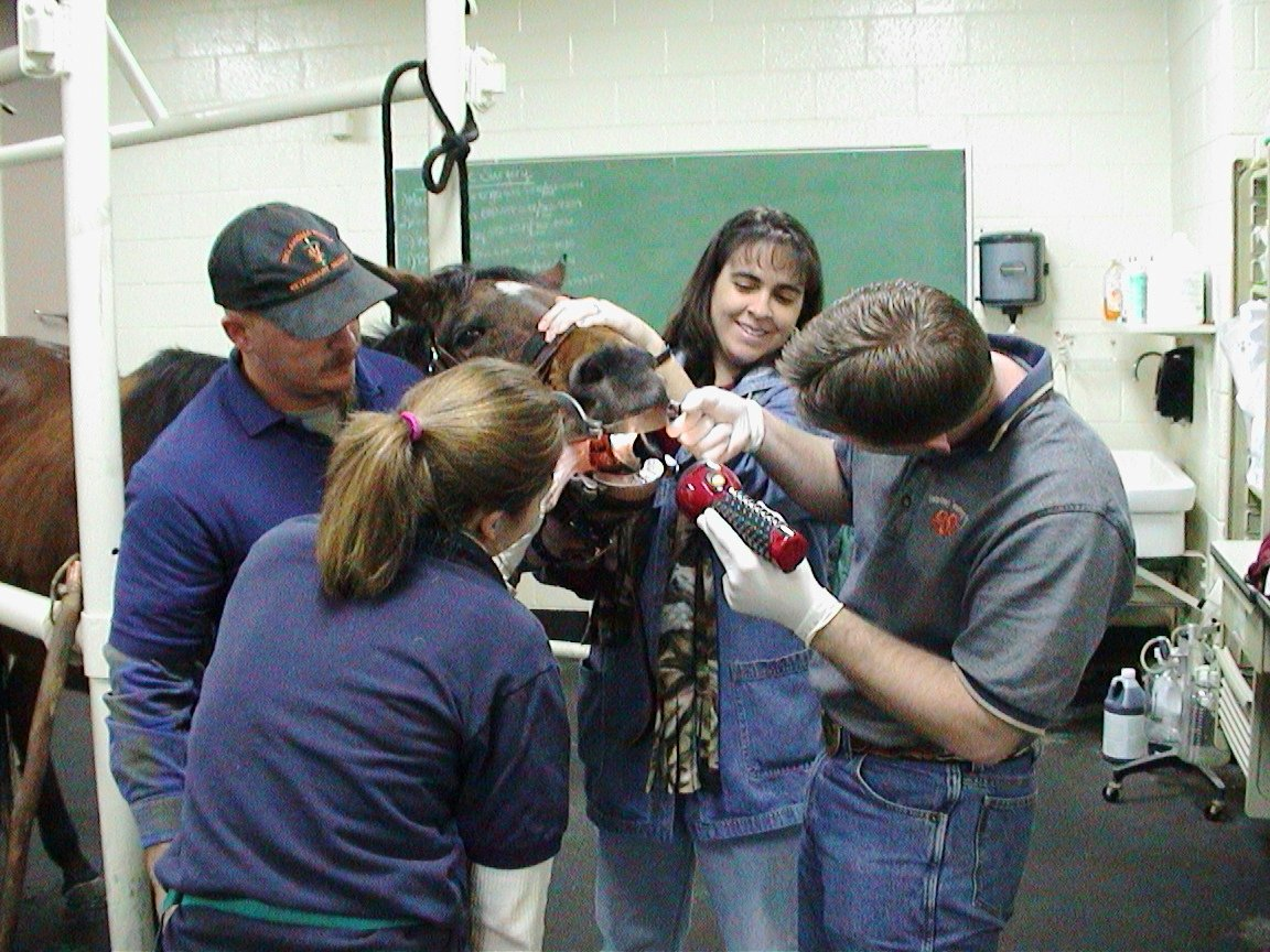 Credit Tim1965 https://commons.wikimedia.org/wiki/File:Vet_Students_Clinical_Training_2006-08.jpg