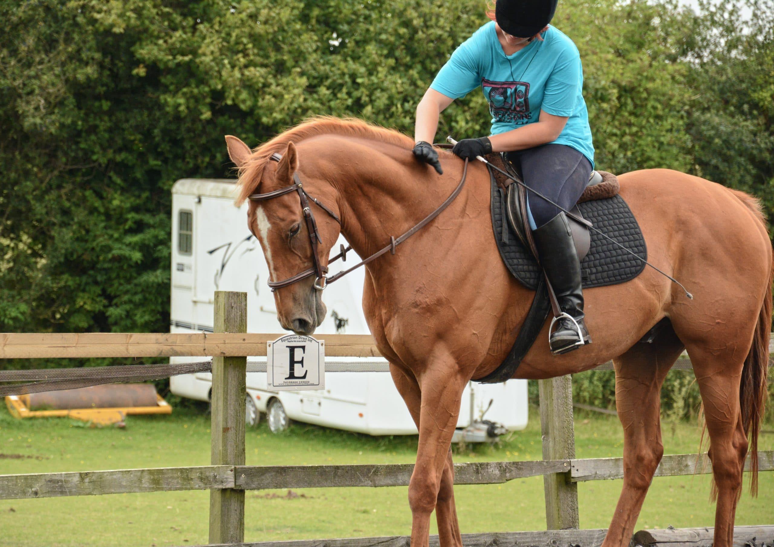 horse owners pet vs hobby