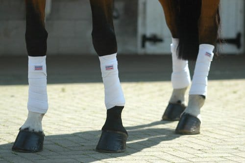horse wearing exercise bandages