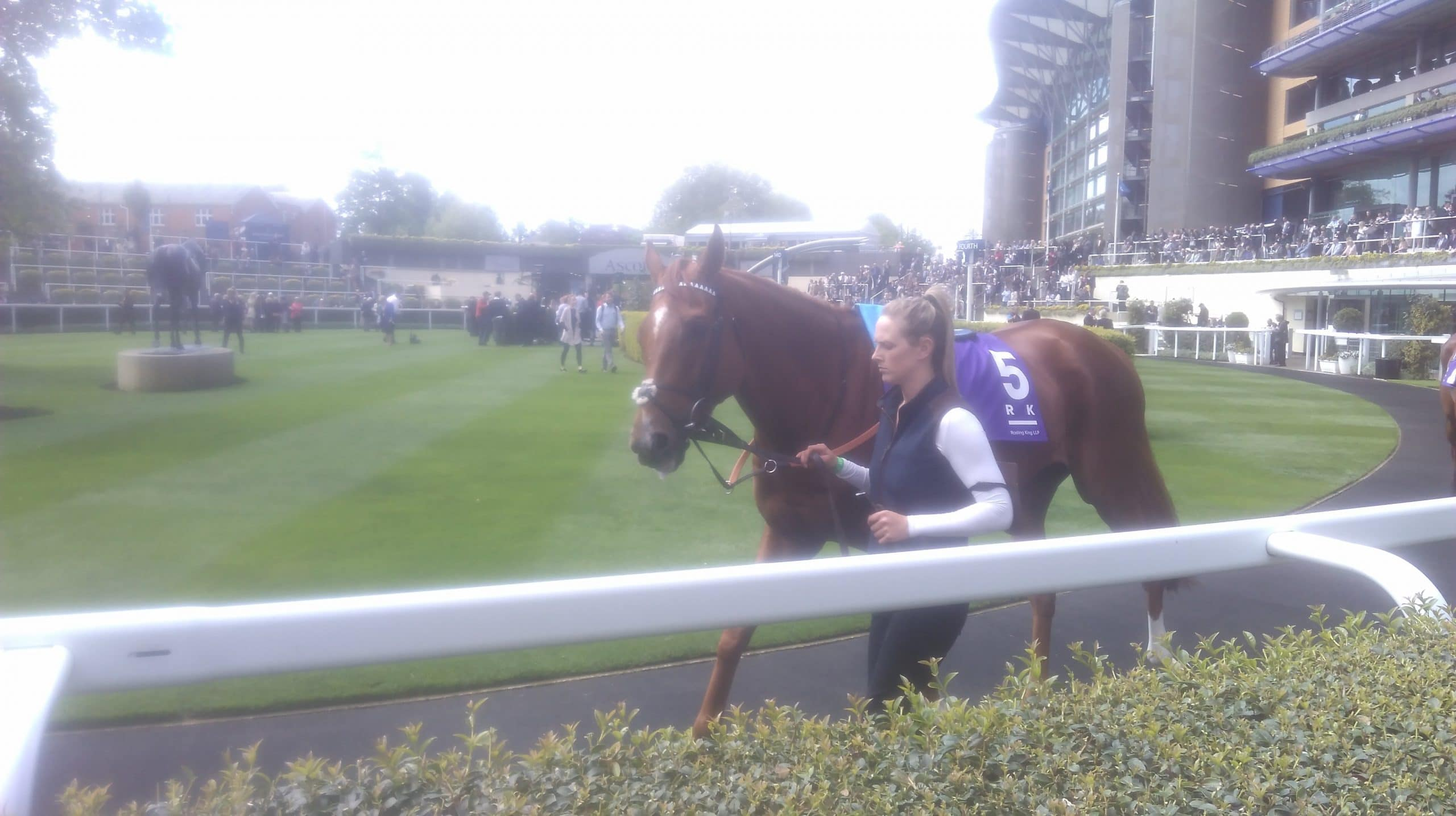 racehorse in pre parade ring
