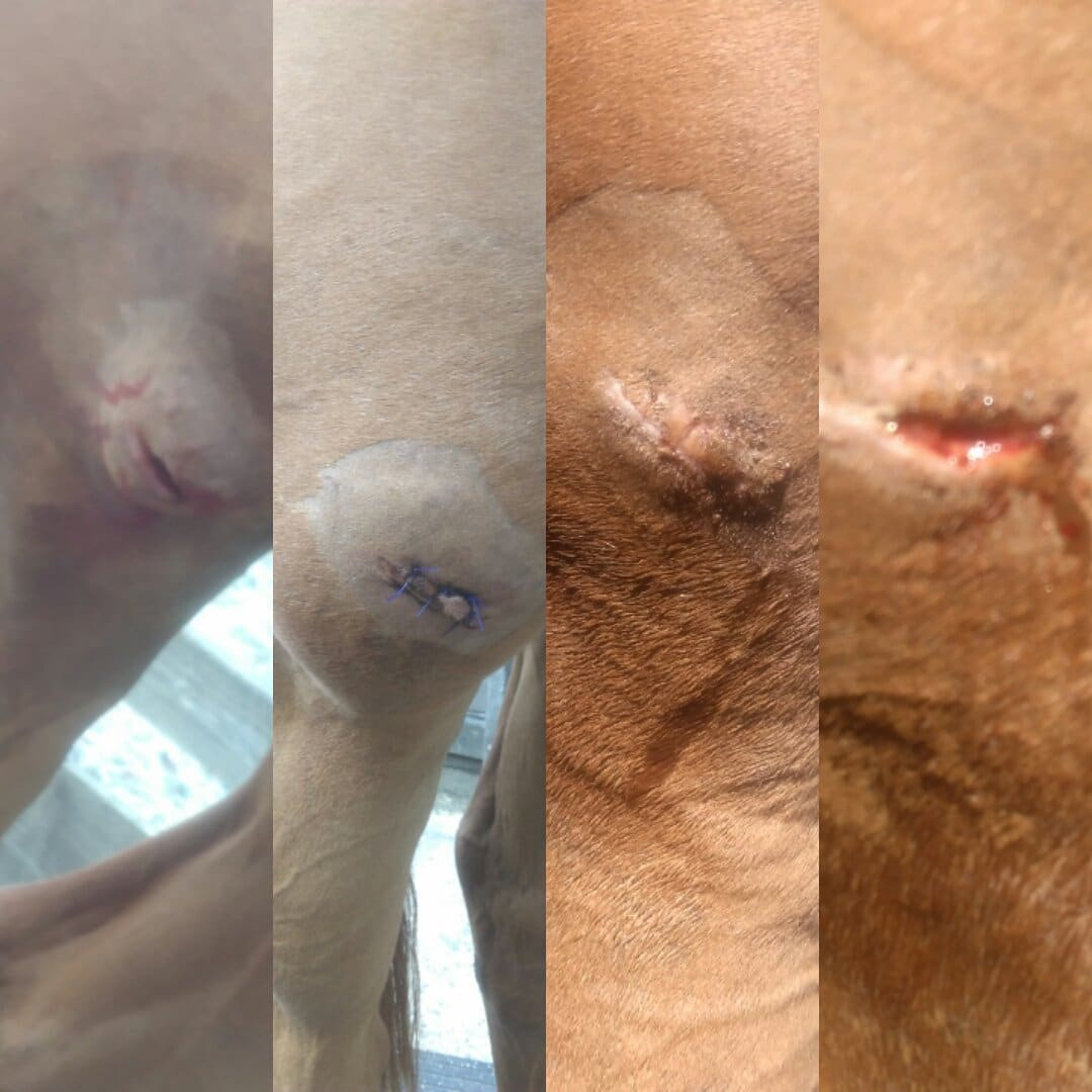 scottie's injury