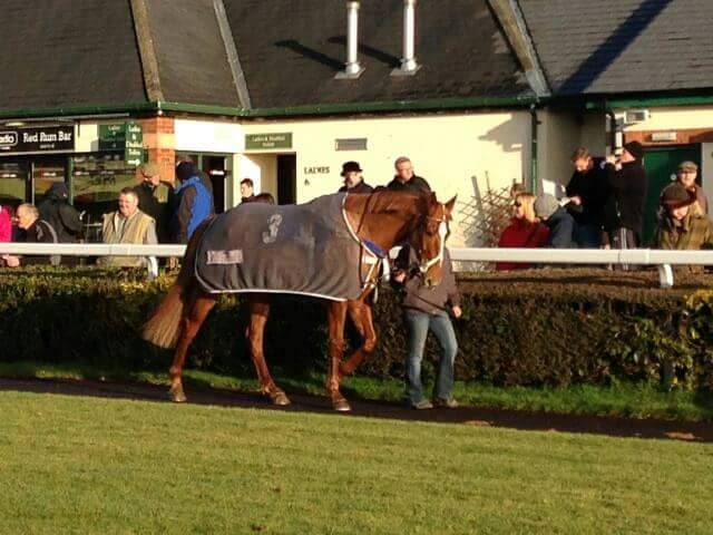 A racehorse walking around the pre parade ring