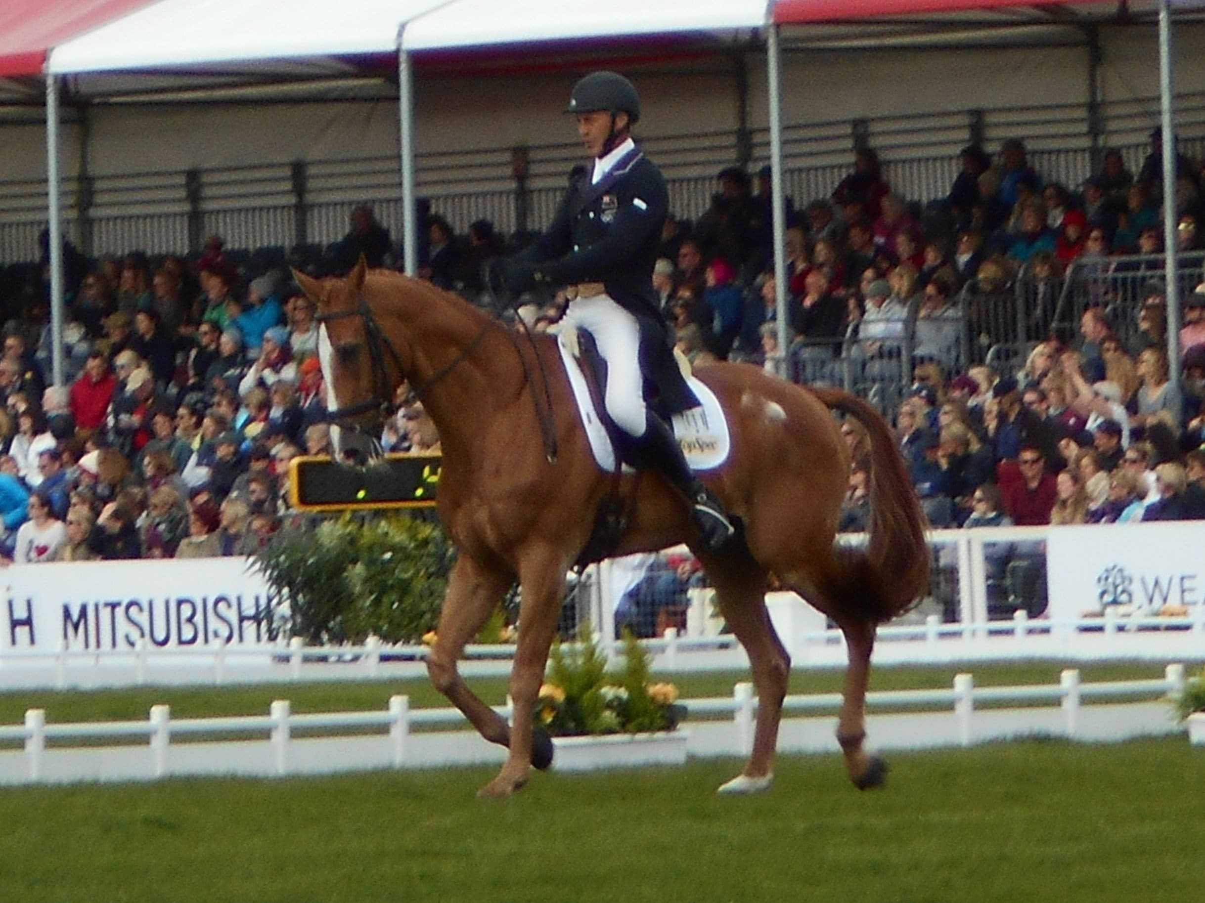 you can ride BE and BD tests with online dressage. You could be the next andrew and nereo!