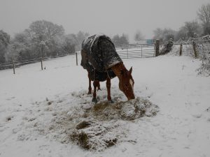 snow, hay in field