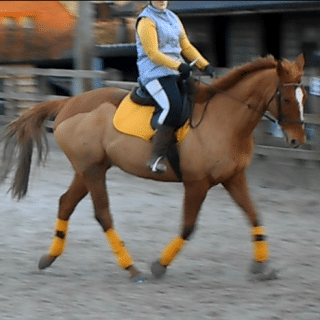 do horses respond to clicking. Online Dressage