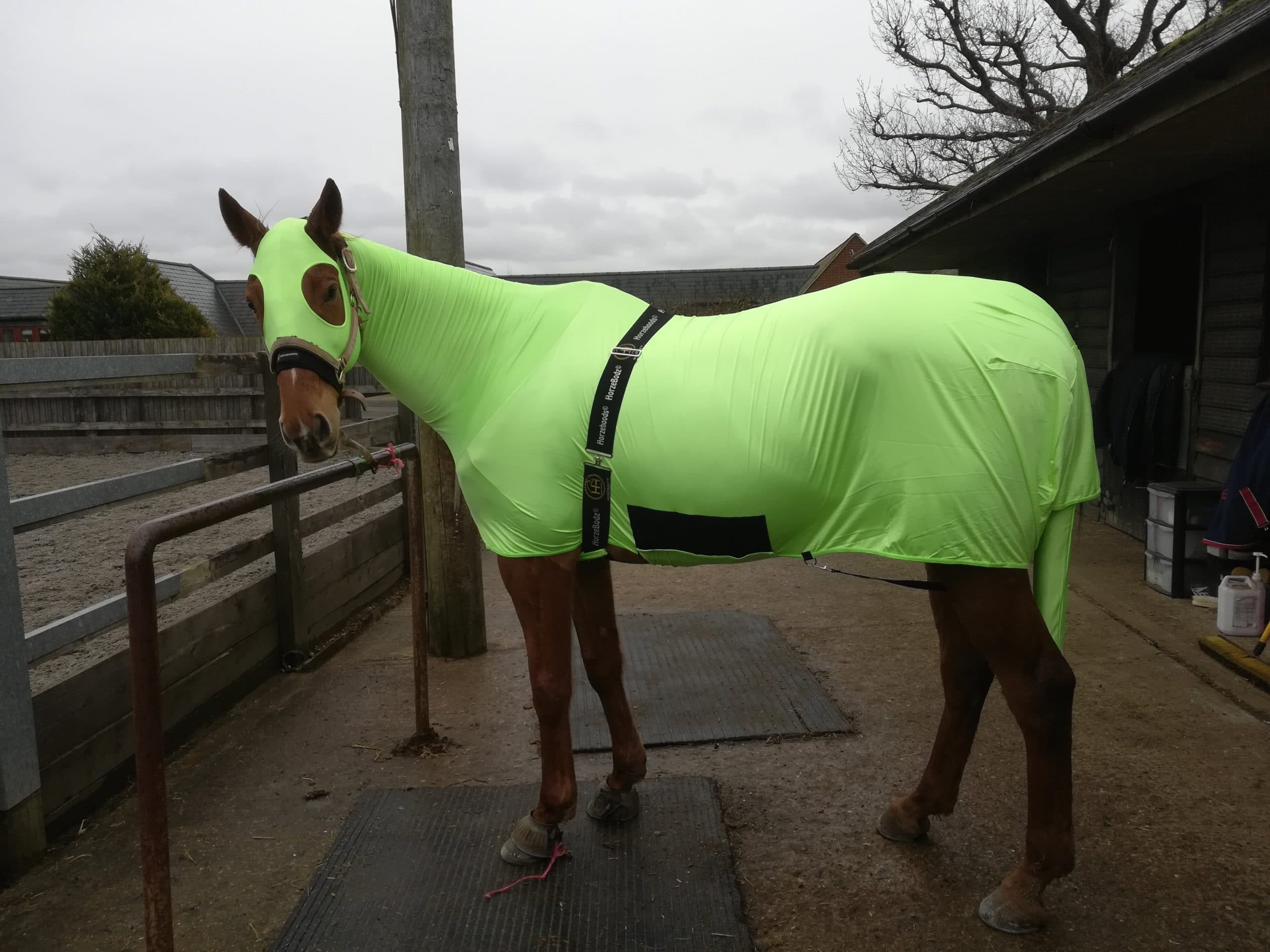 Scottie modelling his horse hoods body suit