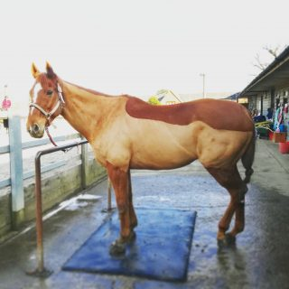 lesson quick legs outside rein