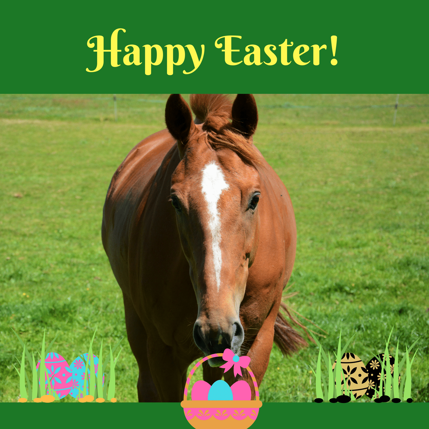 happy easter from equipepper