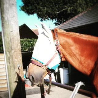 horse owners fly mask
