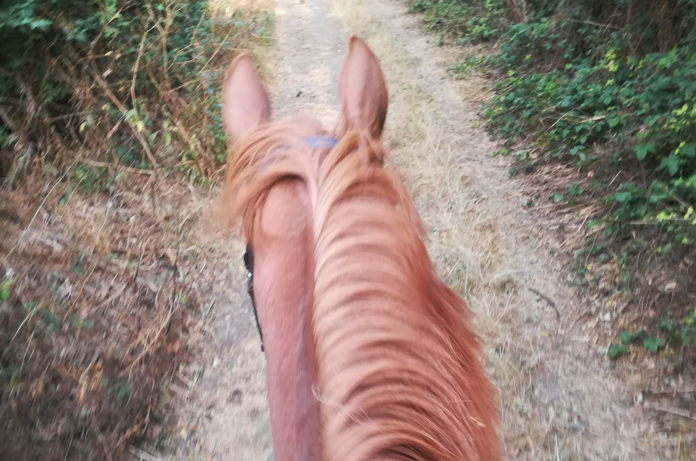 Autumn day on my favourite ride. Between the ears shot.