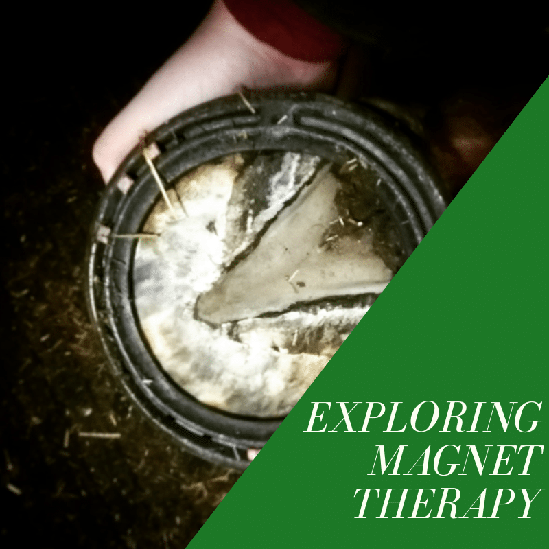 exploring magnet therapy