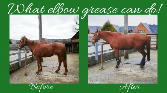 before and after grooming comparison