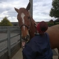 Scottie having a good groom. Should beginners buy a horse?