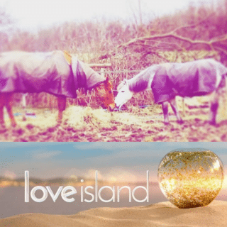 love island with horses