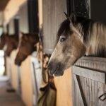 horse talk at the yard