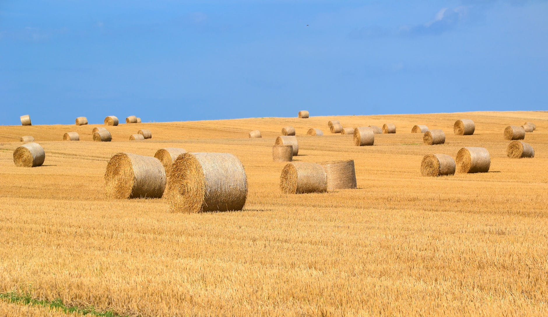 hay bales, when can I feed this years hay