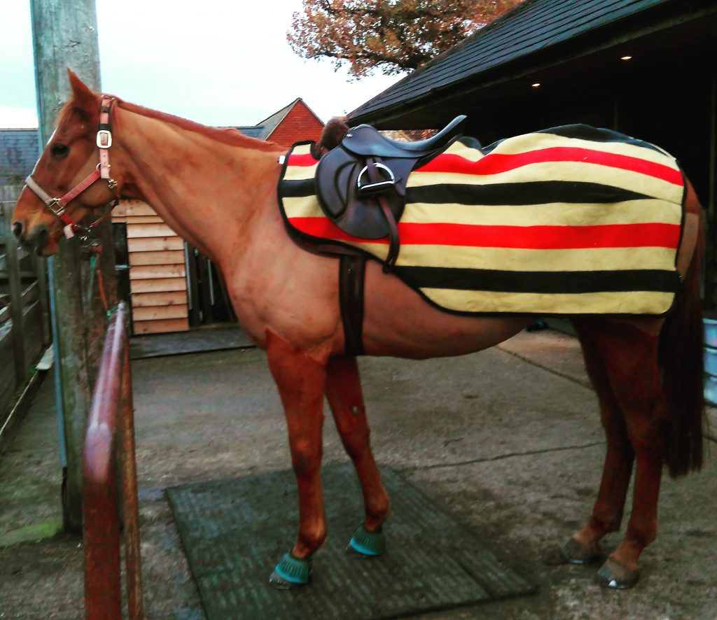 rambo ride on newmarket rug