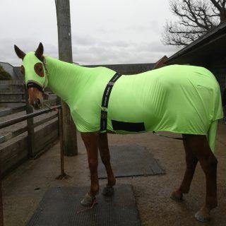 horsehoodz bodz horse rugs fit