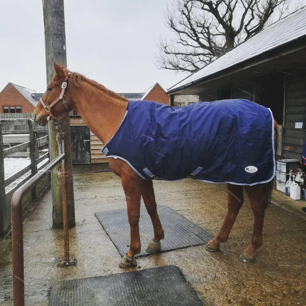 horsewalker rug