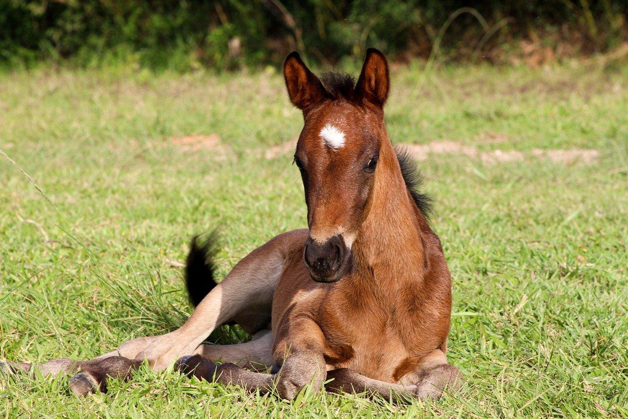 One step closer to Designer Horses *VIP*