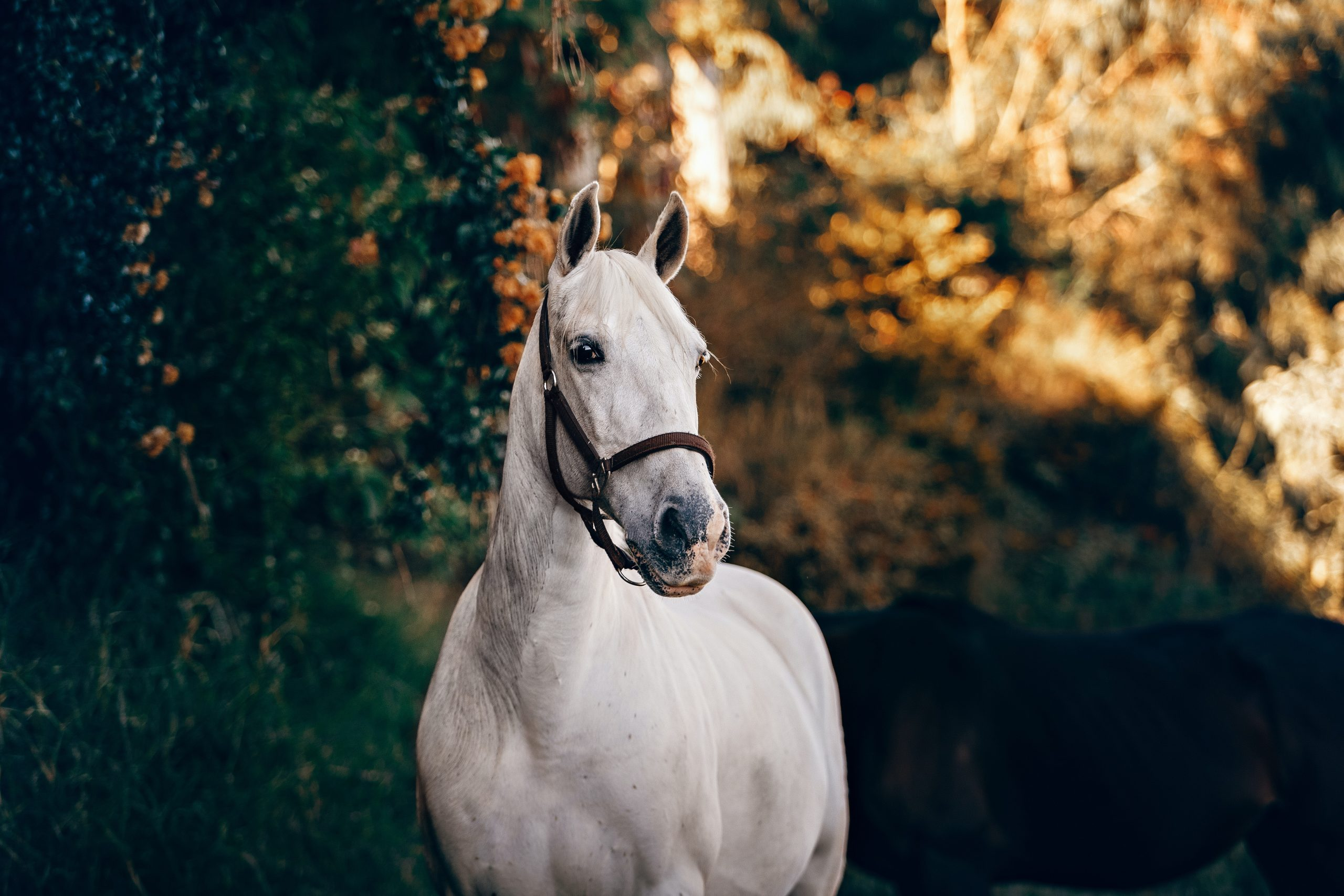 horse search tips for writing a perfect horse sale advert