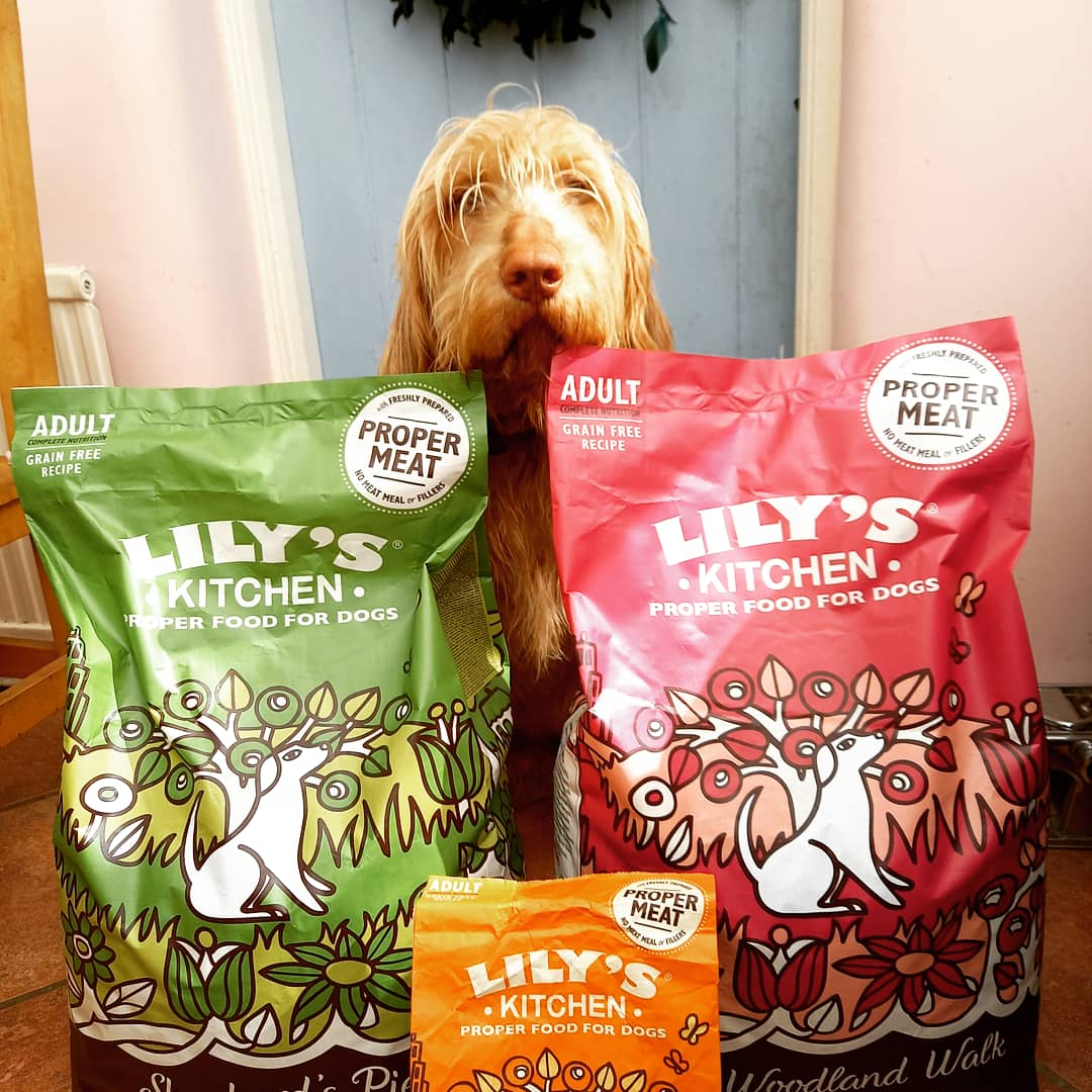 Cecil with his Lily's Kitchen dog food