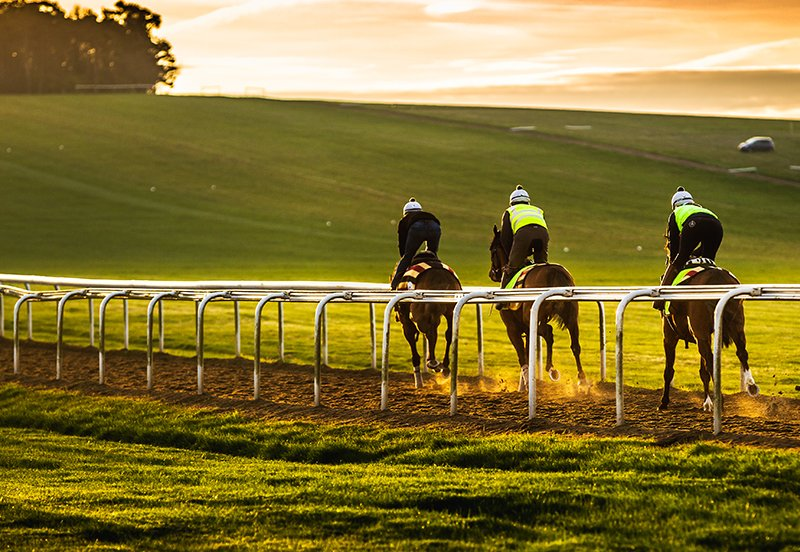 The ex-racehorse market explained and where to find one